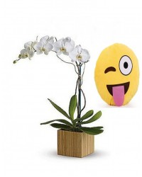 14-ORQUÍDEA BRANCA ALMOFADA Emoticons Do Whatsapp