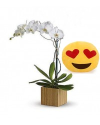 04-ORQUÍDEA BRANCA ALMOFADA Emoticons Do Whatsapp